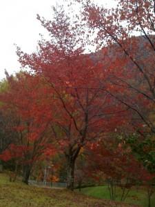 20091024_長野の紅葉その2