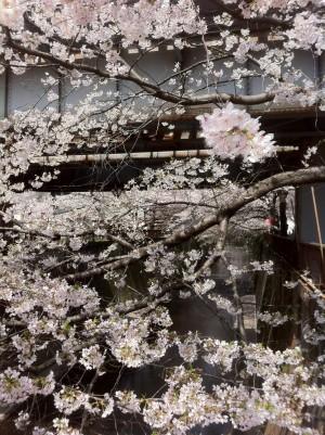 中目黒カフェ開業日記day6のイメージ画像